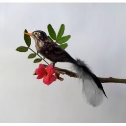 Blackbird mini