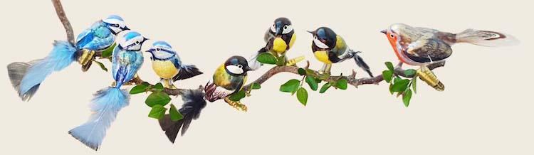 Vogelgruppenbild.jpg